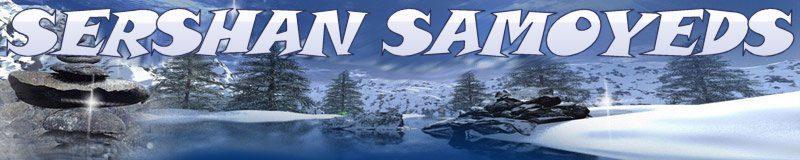Sershan Samoyeds